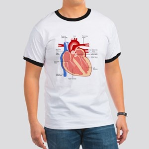 Human Heart Anatomy Ringer T