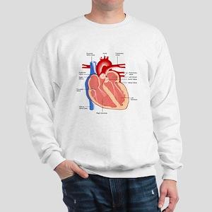 Human Heart Anatomy Sweatshirt
