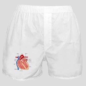 Human Heart Anatomy Boxer Shorts