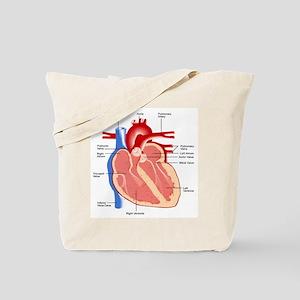 Human Heart Anatomy Tote Bag