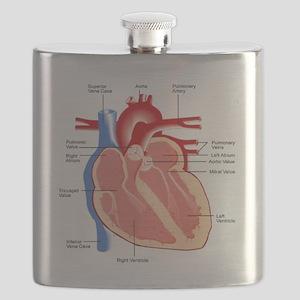 Human Heart Anatomy Flask
