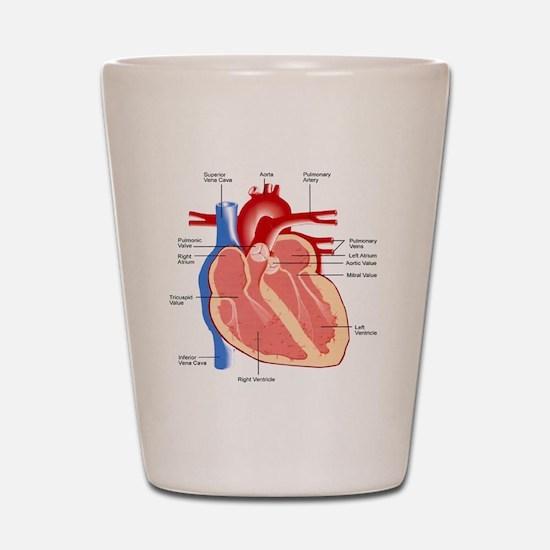 Human Heart Anatomy Shot Glass