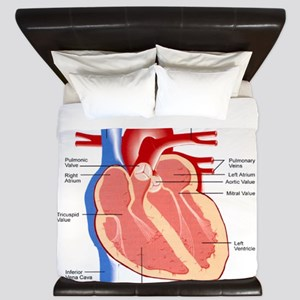 Human Heart Anatomy King Duvet