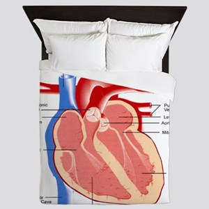 Human Heart Anatomy Queen Duvet
