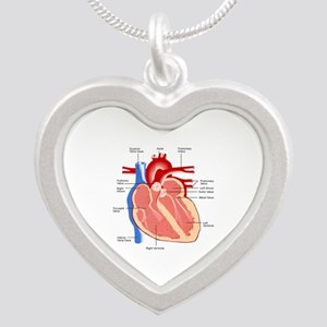 Human Heart Anatomy Silver Heart Necklace