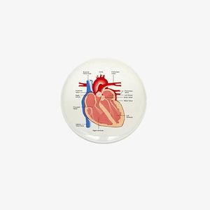 Human Heart Anatomy Mini Button