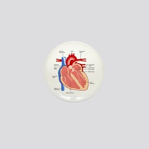 Human Heart Anatomy Mini Button