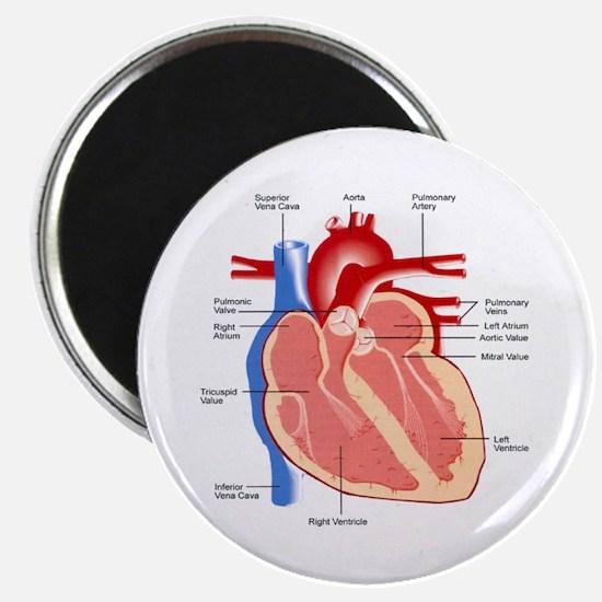 "Human Heart Anatomy 2.25"" Magnet (100 pack)"