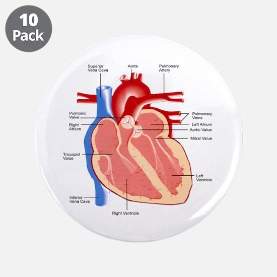 "Human Heart Anatomy 3.5"" Button (10 pack)"