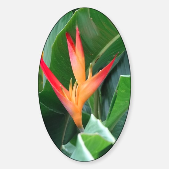 Bird of Paradise Sticker (Oval)