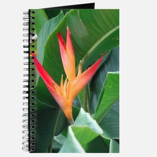 Bird of Paradise Journal