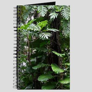 Rainforest03 Journal