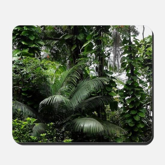 Tropical Rainforest Mousepad