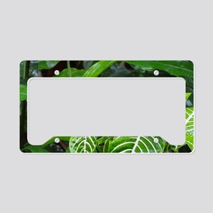 Tropical Flower License Plate Holder
