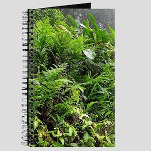 Rainforest Path 04 Journal