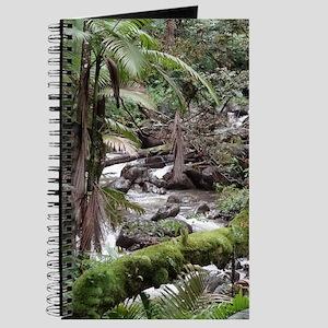 Rainforest Stream Journal