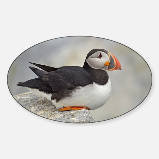 Puffin Sticker (Oval)