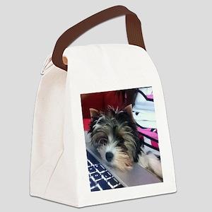Biewer Terrier Puppy Canvas Lunch Bag