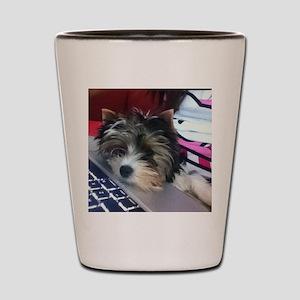 Biewer Terrier Puppy Shot Glass