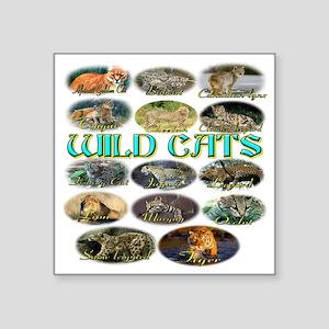 "wildcats Square Sticker 3"" x 3"""
