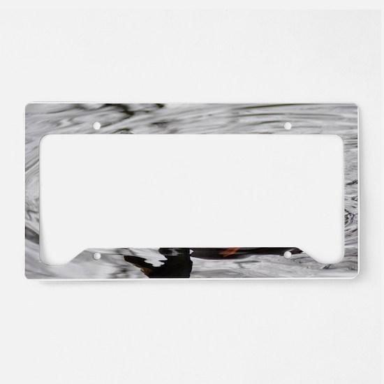 DSC_0021 License Plate Holder