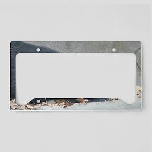Moon Bear (3) License Plate Holder