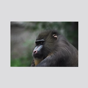 Mandrill Baboon (4) Rectangle Magnet