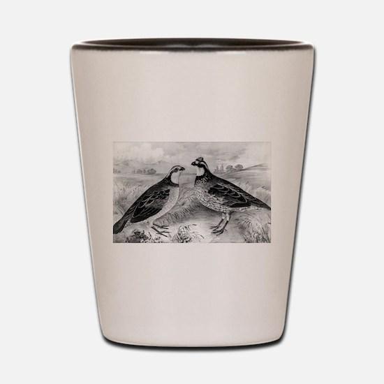 Quails - 1849 Shot Glass