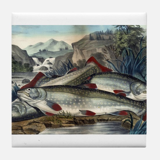 Brook trout--just caught - 1907 Tile Coaster
