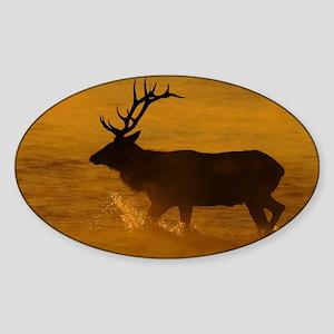 Bull Elk at Sunrise Sticker (Oval)