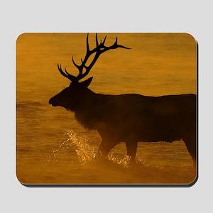 Bull Elk at Sunrise Mousepad