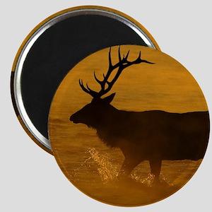 Bull Elk at Sunrise Magnet
