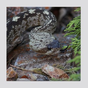 Black-tailed Rattlesnake Tile Coaster
