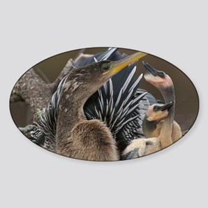 Anhinga...Living in the Sticks Sticker (Oval)