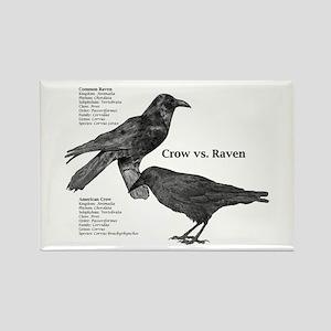 Crow vs. Raven - Rectangle Magnet