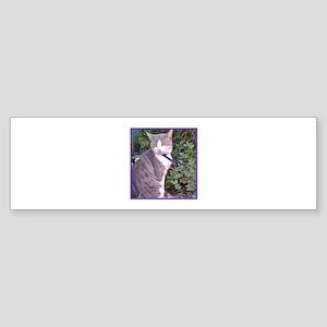 gray cat Bumper Sticker