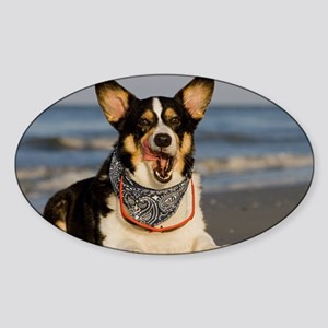 Cute Corgi Licking his Chops Sticker (Oval)