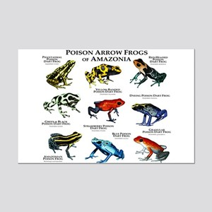 Poison Dart Frogs of Amazonia Mini Poster Print