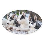 Husky Puppy Oval Sticker