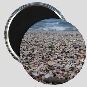 Tamarindo Beach Costa Rica Shells Magnet