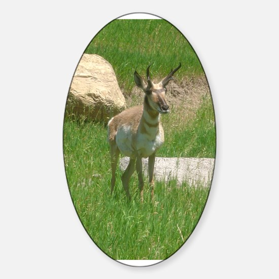pronghorn Oval Decal