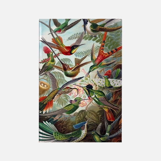Vintage Hummingbird Rectangle Magnet