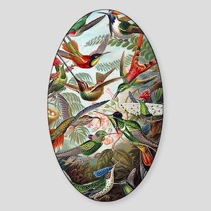 Vintage Hummingbird Sticker (Oval)