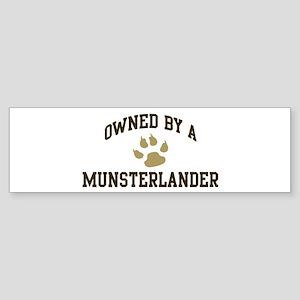 Munsterlander: Owned Bumper Sticker