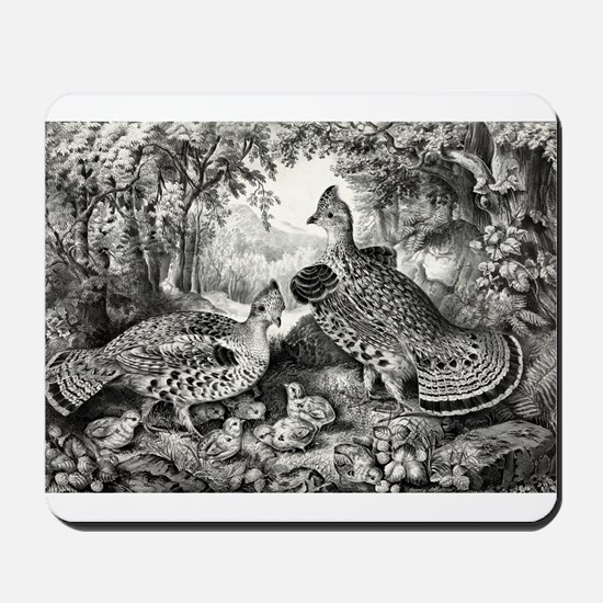 The happy family - ruffed grouse and young - 1866