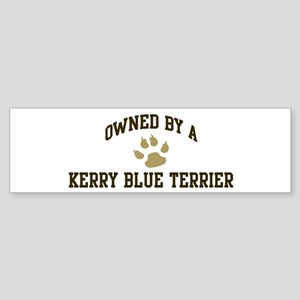 Kerry Blue Terrier: Owned Bumper Sticker