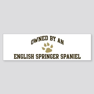 English Springer Spaniel: Own Bumper Sticker