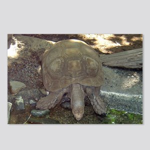 tortoise Postcards (Package of 8)