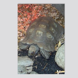tortoise 3 Postcards (Package of 8)