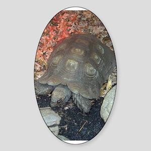 tortoise 3 Oval Sticker